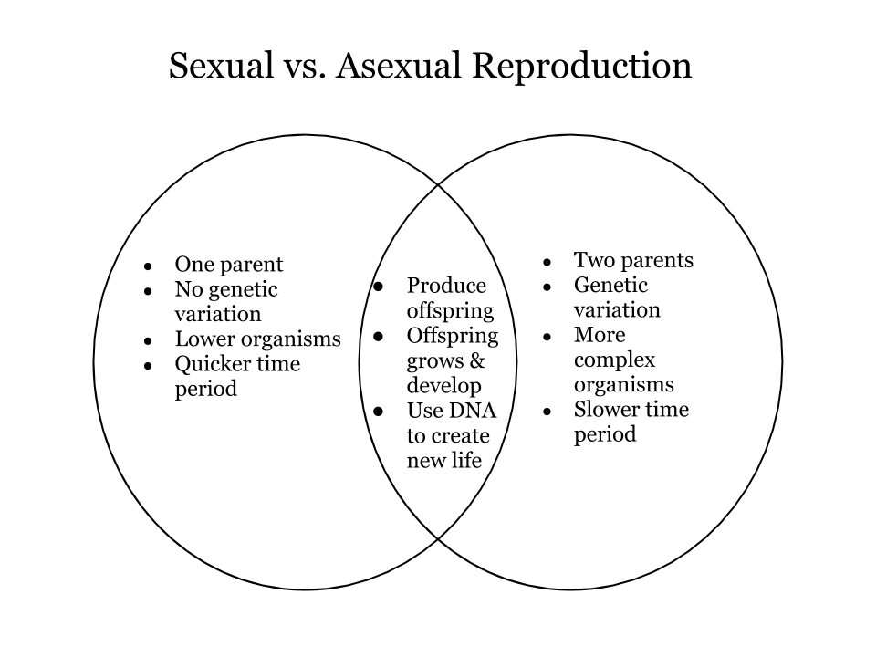 Asexual and sexual reproduction similarities and differences graphic organizer